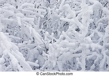 branches of trees covered with white snow in wood
