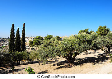 Mount of Olives - View from the Mount of Olives to Walls of...