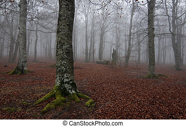 Forest at autum - Autum forest in a foggy day