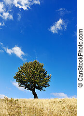 One tree and grass land