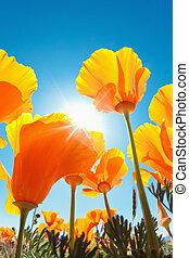 Beautiful Spring Flowers - Spring Flowers, Macro View...