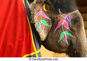 Elephant. India, Jaipur, state of Rajasthan.