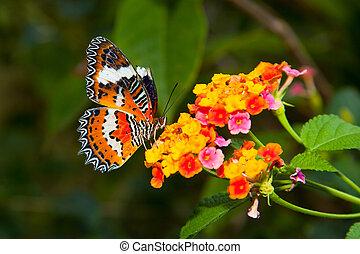 hermoso, mariposa, colorido, flor