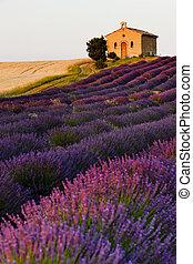 chapel with lavender and grain fields, Plateau de Valensole,...