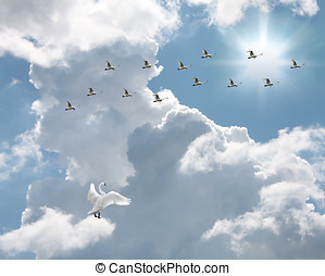 Swans Going Home - Flock of swans flying into sunlit sky...