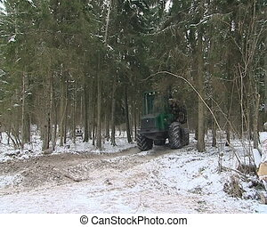 Tractor with huge wheels carries cut tree trunks on forest road.