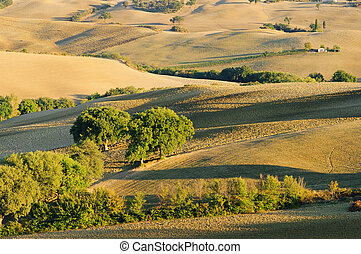 Tuscany hills in fall 03