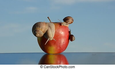 red apple on mirror and snails