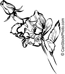 big and small rose buds - black and white big and small rose...