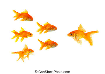 Three goldfishes - Sex goldfishes isolated on a white...