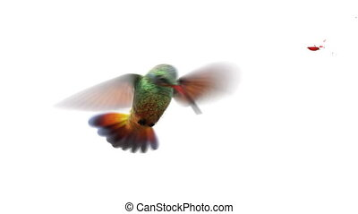 Humming bird, beautiful 3d animation