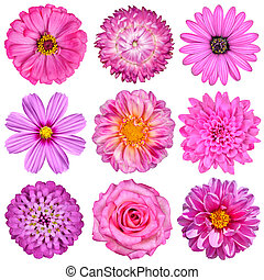 Selection of Pink White Flowers Isolated on White Nine...