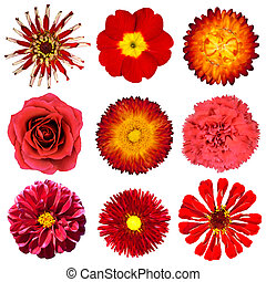 Collection of Red Flowers Isolated on White Background Set...