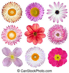 Various Pink, Red, White Flowers Isolated on White...