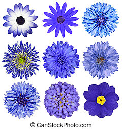 Various Blue Flowers Selection Isolated on White Background....