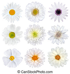 Various Selection of White Flowers Isolated on White...