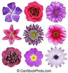 Various Pink, Purple, Red Flowers Isolated on White...