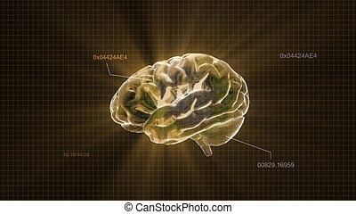 gold crystal brain timecode