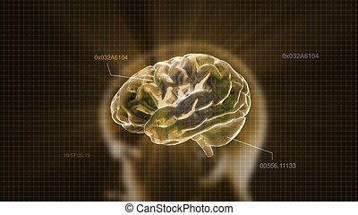 gold crystal brain and head timecode