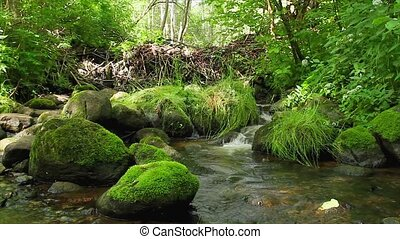 forest stream, the stones