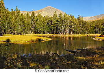 A quiet lake in Yellowstone Park - A quiet lake, surrounded...