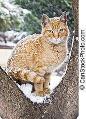 Homeless Cute Cat in the Snow - Cute homeless cat sitting on...