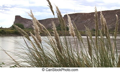 Chubut river, Patagonia Argentina - Grass in wind Chubut...