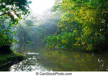 Mystical lake in morning forest - Mystical lake in forest...