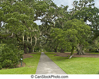 Giant Oaks Brookgreen Gardens - The giant oaks of Brookgreen...