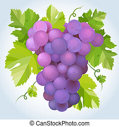 Black grapes with green leaf EPS10 vector illustration