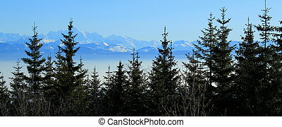 Alps behind fir trees - Panorama of the Alps mountains...