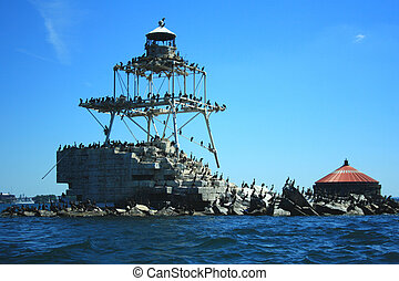 Colony Of Double Crested Cormorants