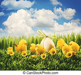 Easter chicks in the grass - Little Easter chicks in the...