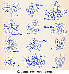 Hand Drawn Leaves Icon Set