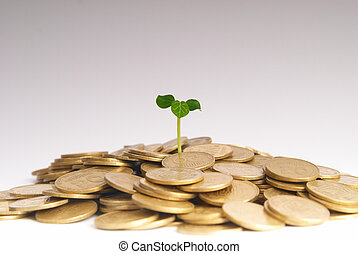 Green plant growing from the coins Money financial concept