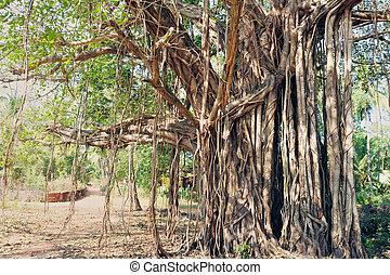 drzewo, Poświęcony