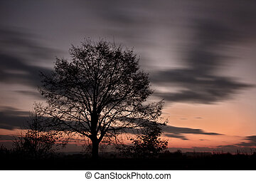 After sunset - Tree after sunset with blurred sky.