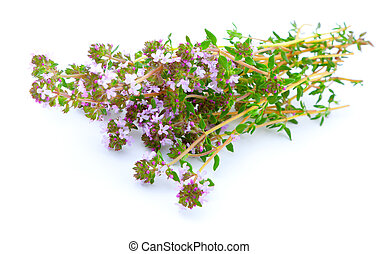 thyme on white isolated background - thyme on white isolated...