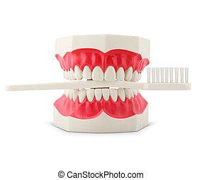 牙刷, 模型, 白色, 牙齒