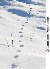 Tracks in the snow - Tracks of an animal in the snow with...