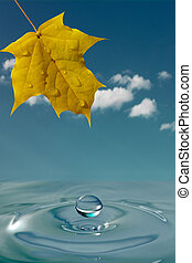 peaceful environment background - yellow maple leaf and...