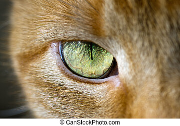 Cat eye - close up of a cat eye
