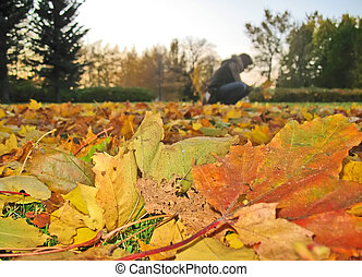 Silhouette of a girl collecting fallen leaves - Silhouette...