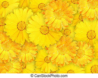 Background of orange and yellow wet flowers - Abstract...