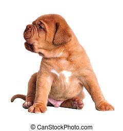 Cute puppy sitting