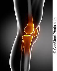 humano, rodilla, anatomía, lateral, vista