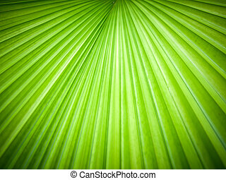 Abstract image of leaves - Abstract image of Green Palm...
