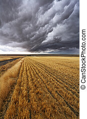 Thunderclouds above Montana - Thunderclouds above fields...
