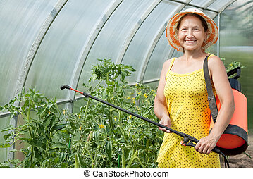gardener spraying tomato plant - Female gardener spraying...