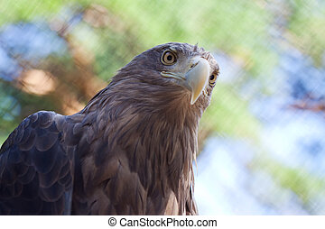 sea eagle against defocused nature background